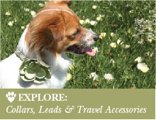 Explore: Collars, Leads & Travel Accessories