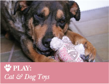 Play: Cat & Dog Toys