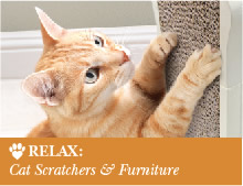 Relax: Cat Scratchers & Furniture